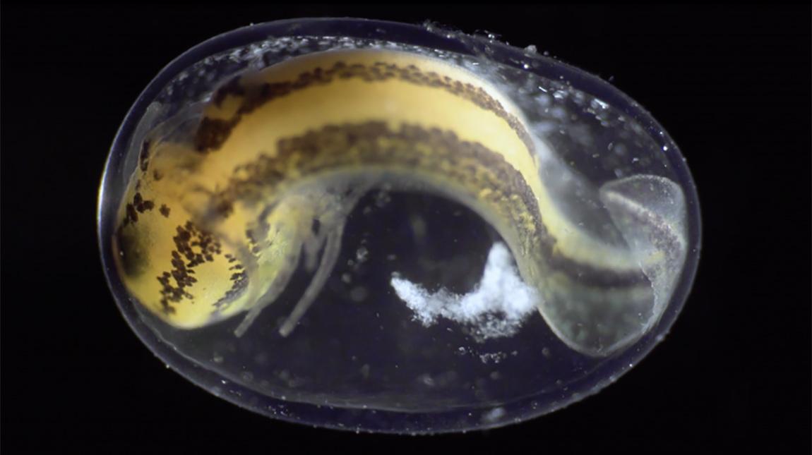 فيلم Becoming | تايم لابس مذهل لتحول خلية الى حيوان برمائي