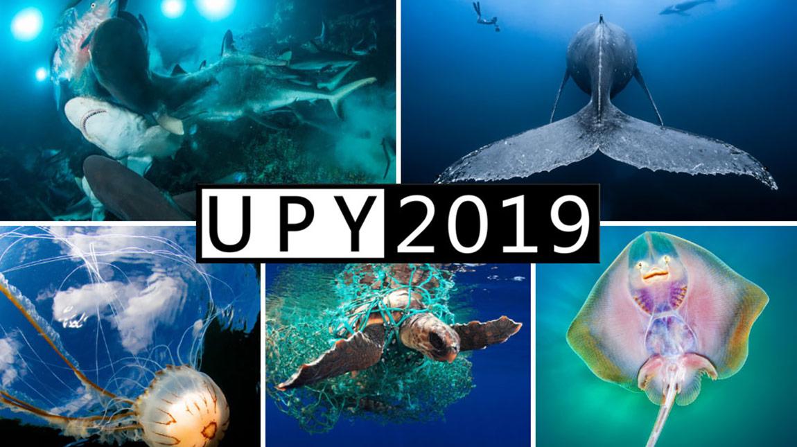 الفائزين في مسابقة Underwater Photographer لعام 2019