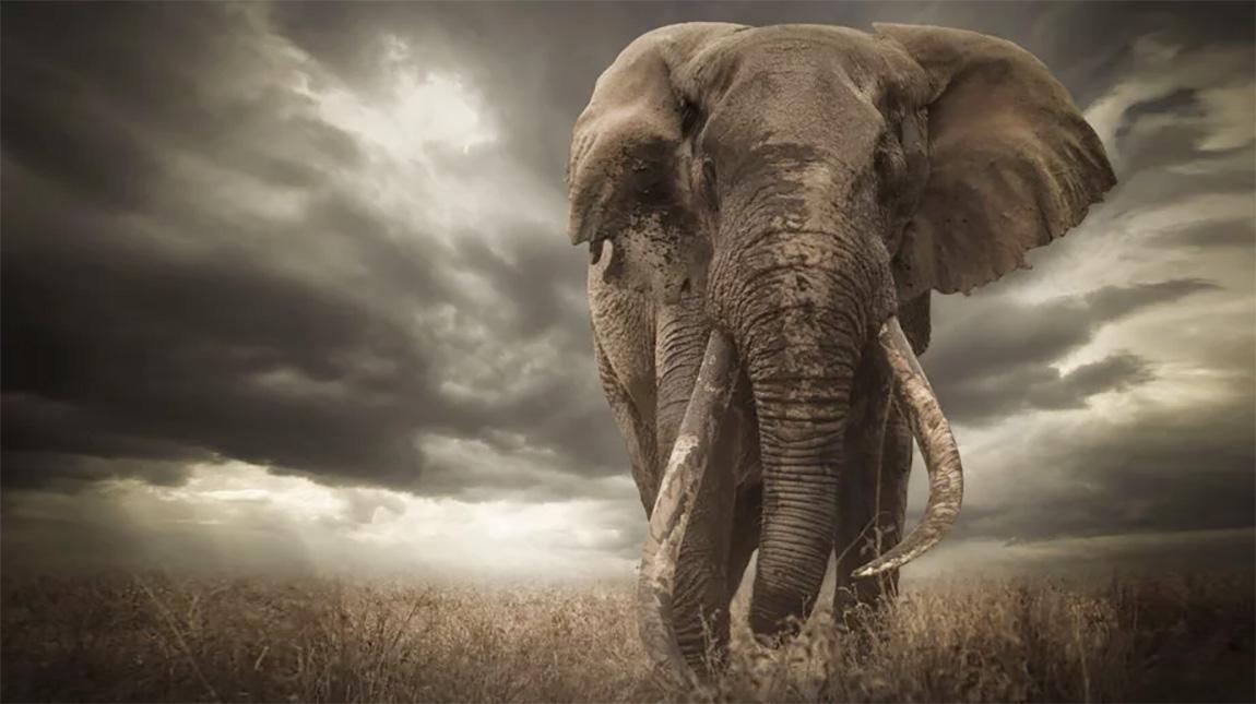 استبعاد المصور الفائز بجائزة Africa Geographic 2019