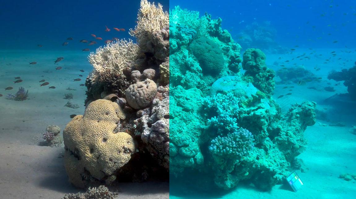 برنامج Sea-thru لإزالة الماء من الصور الملتقطة تحت الماء