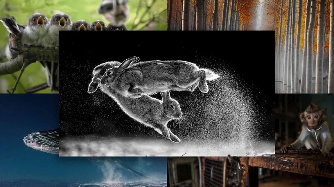 الصور الفائزة بجائزة مصور الطبيعة لعام 2019