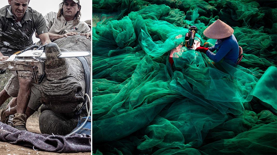 الصور الفائزة بجوائز Environmental Photographer of the Year لعام 2019